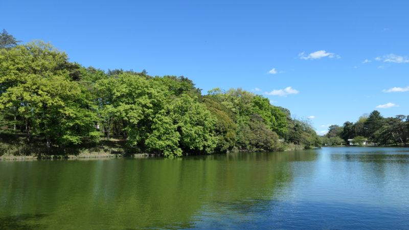 大宮公園 ボート池