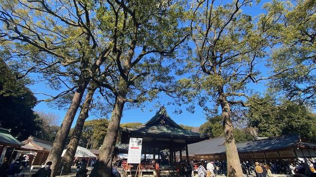 大宮氷川神社 境内のクスノキ